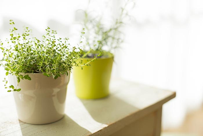 Houseplants That Help Clean Your Air